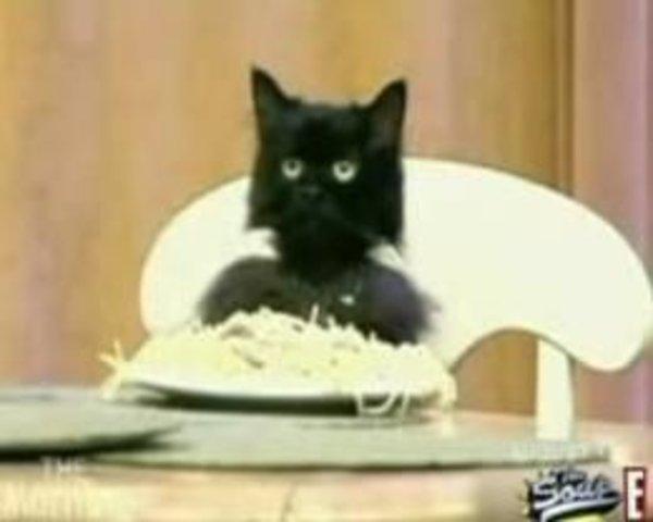 Cat Eating Pasta
