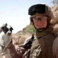 David Motari / Soldier Throws Puppy Off a Cliff