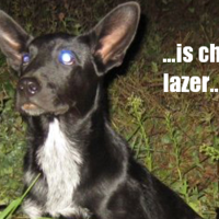 Lazer Dog