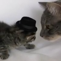 Kitten Wearing a Tiny Hat