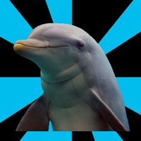 Social Networking Dolphin