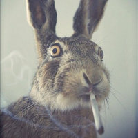 Easter 4/20