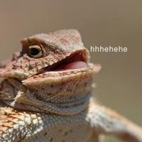 Laughing Lizard / hhhehehe