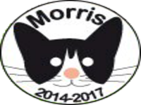 Morris the Cat-didate