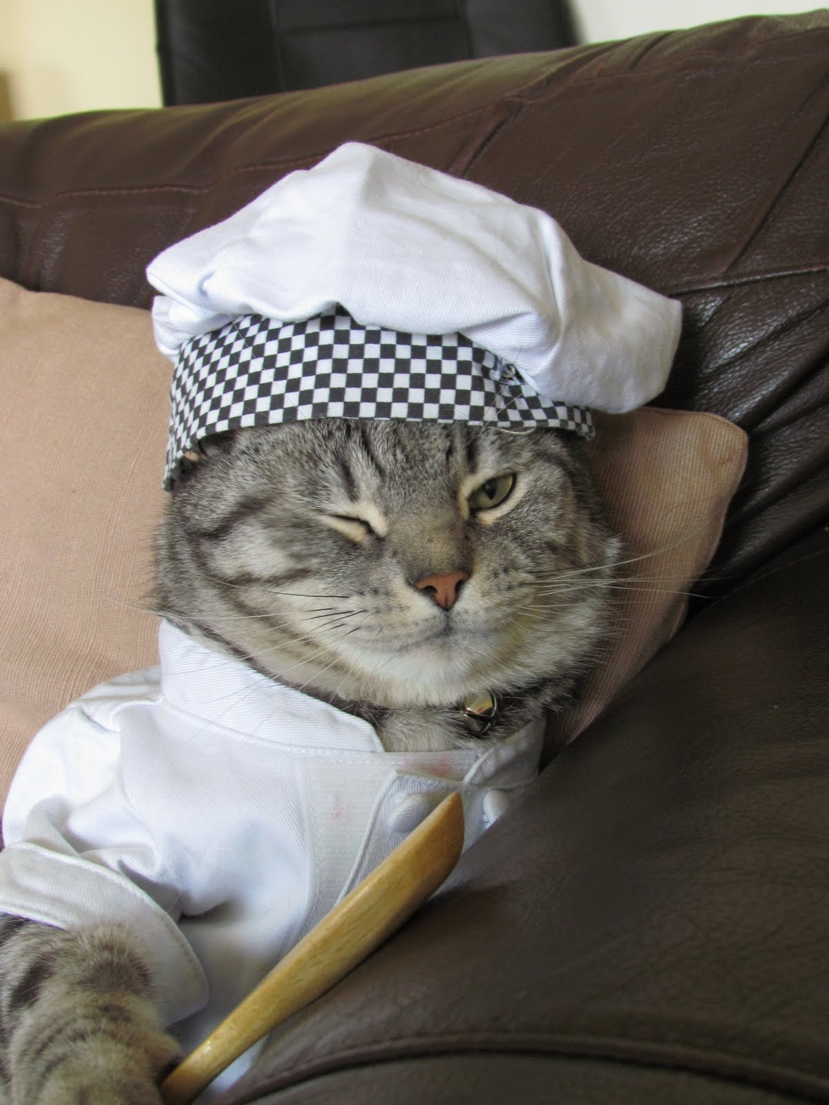 Cooking Show Cat In The Hat