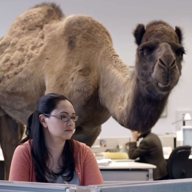 Geico Happy Hump Day Images Hump day