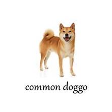 Doggo | Know Your Meme