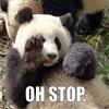 OH STOP PANDA