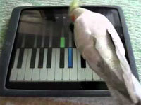Animals Playing With iPads