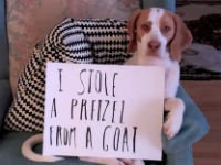 The Ultimate Dog Shaming