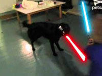 Epic Canine Jedi Battle