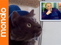 Cats React to Elders Reacting