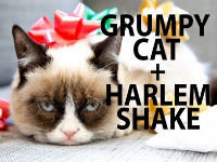 Harlem Shake: Grumpy Cat Edition