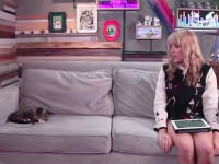 DailyGrace Interviews Lil Bub