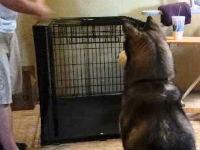 Give This Dog an Oscar!