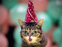 Happy Second Birthday, Bub!