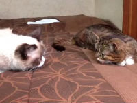 Grumpy Cat Meets Lil Bub