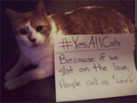 Stand Against the Pawtriarchy with #YesAllCats
