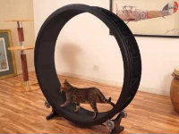 Hamster Wheel for Cats Project Raises $100K