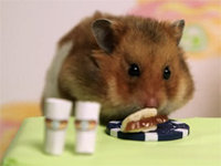 Tiny Hamster vs. Takeru Kobayashi