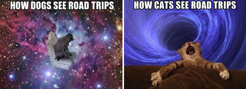 Dogs vs. Cats: Road Trip Edition