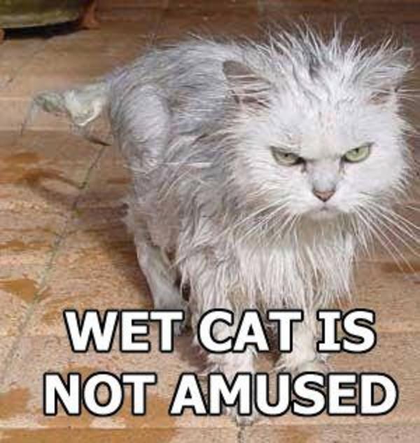 [Image - 25885] | Trashcat Is Not Amused | Know Your Meme