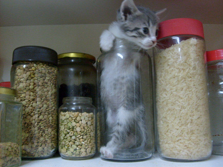 Image 37996 Bonsai Kittens Know Your Meme