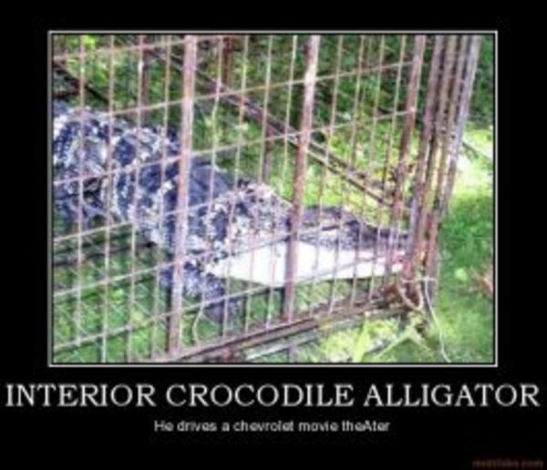 Image 64858 Interior Crocodile Alligator Know Your