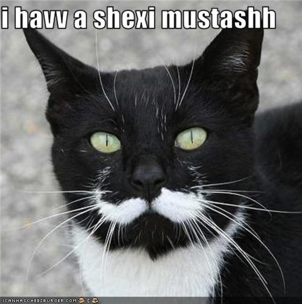 Funny Moustache Quotes: [Image - 178182]