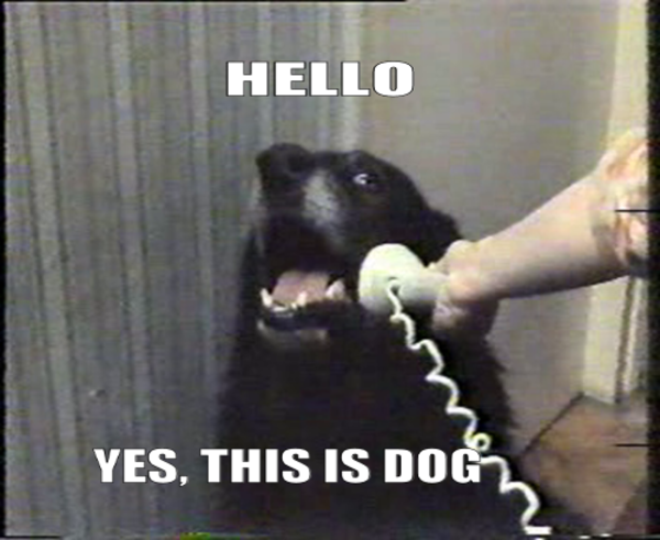 """Or """"Hello this is dog""""!"""