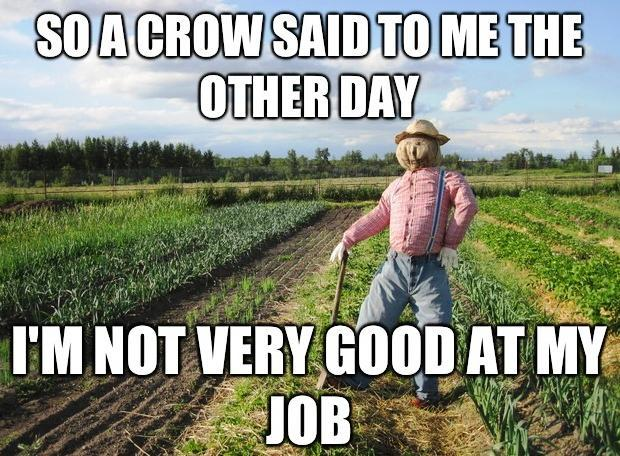 Image result for Scarecrow Meme