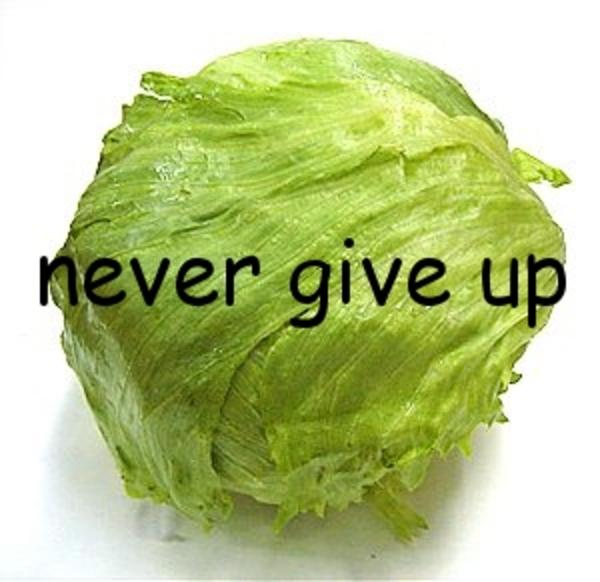 "[Image - 465466] | Lettuce / It Says ""Never Give Up ..."