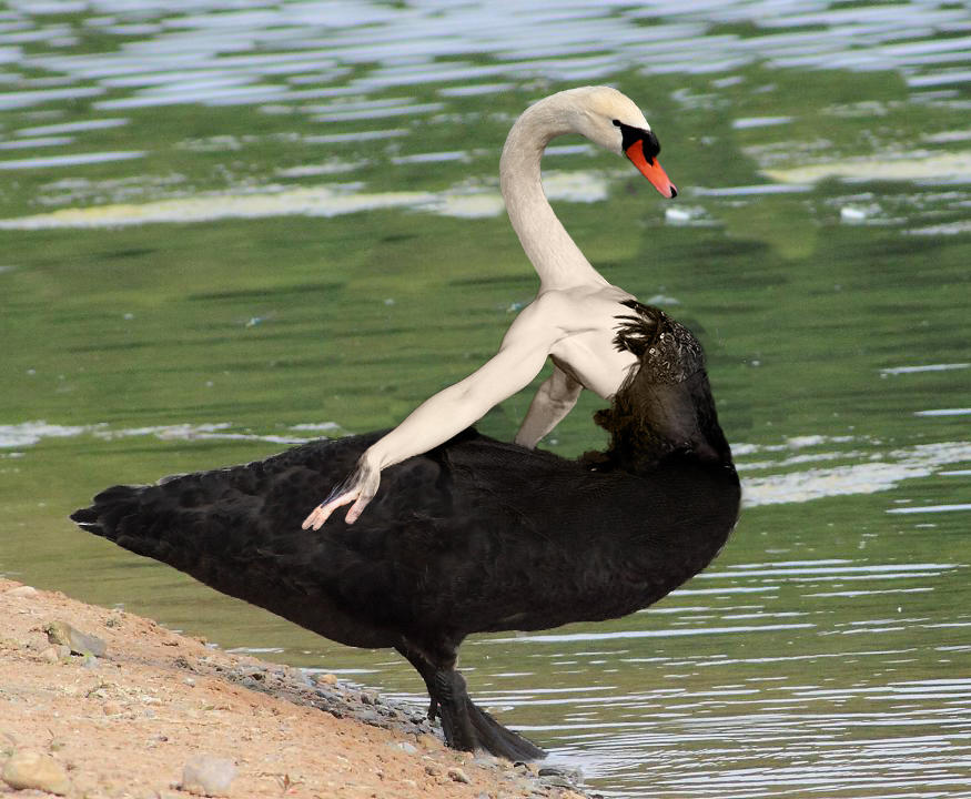 black swan psychology review essay Read this essay on movie critique - black swan come browse our large digital warehouse of free sample essays get the knowledge you need in order to pass your classes and more only at termpaperwarehousecom.