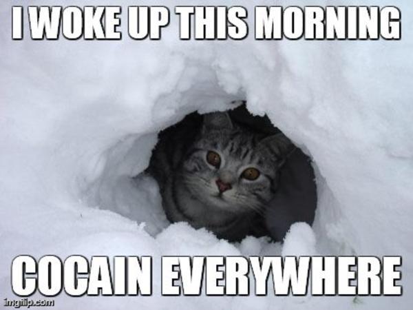 Cat Meme Drug Snoow