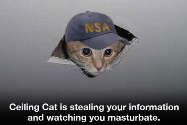 Nsa Cat Ceiling Cat Know Your Meme