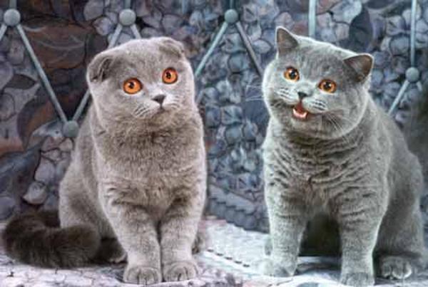 happy cat original image  with a  u0026quot sad cat u0026quot