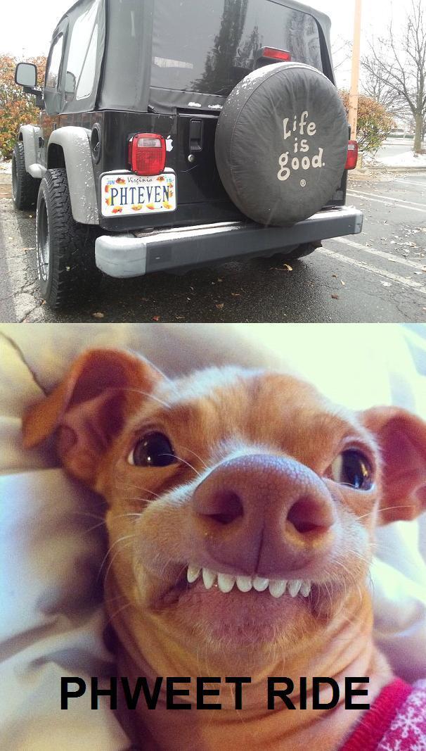 Tuna The Dog Phteven - photo#16