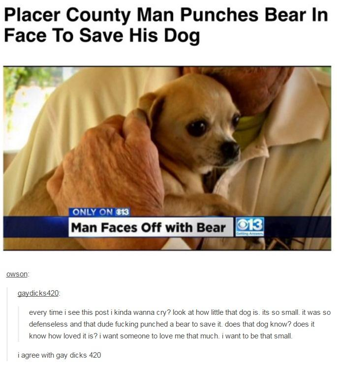 Knowyourmeme Hes A Good Dog