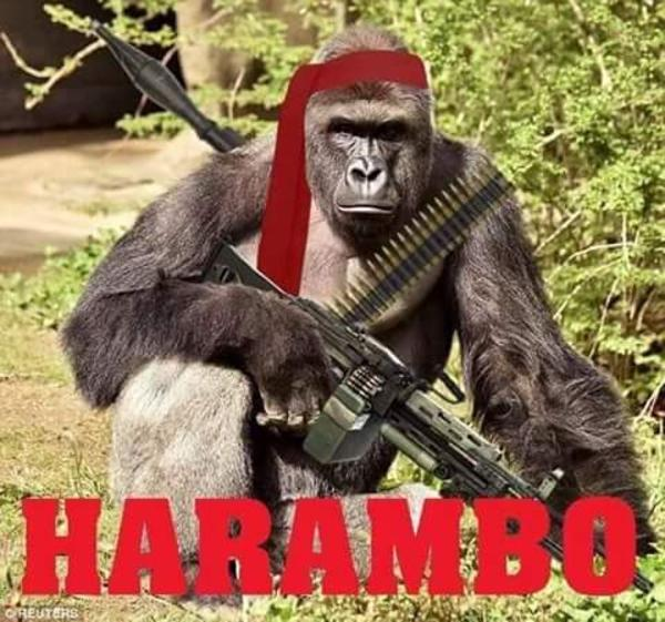 HARAMBO | Harambe the Gorilla | Know Your Meme