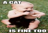 A Cat Is Fine Too