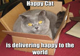 Happy Cat
