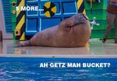 Lolrus