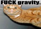 Gravity Cat