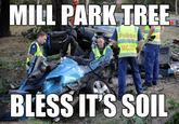 Mill Park Tree