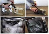 Bonsai Kittens