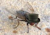 Jasper the Fly