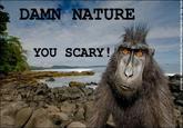 Damn Nature, You Scary!