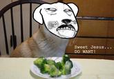 Broccoli Dog
