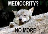 Ignorant to Adversity wolf