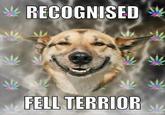 Wilf the fell terrier.